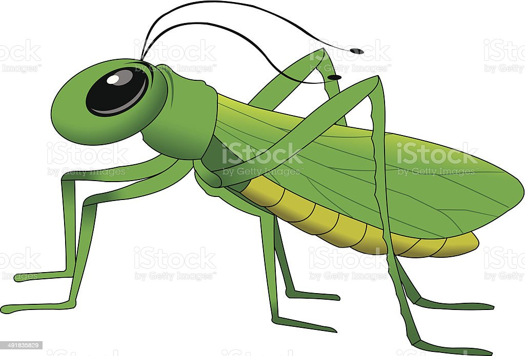 grasshopper vector art illustration