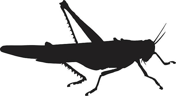 grasshopper - cricket stock illustrations, clip art, cartoons, & icons