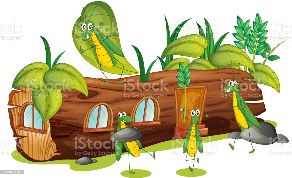 Grasshoppers and a wood house royalty-free grasshoppers and a wood house stock vector art & more images of animal
