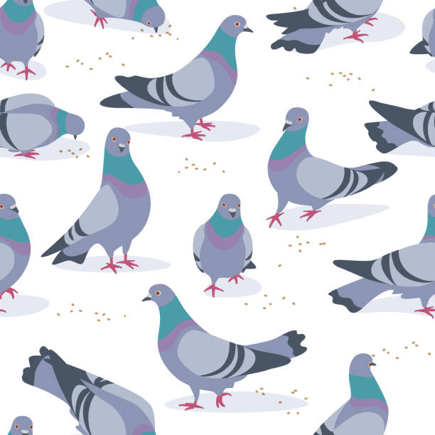 Gray Doves in Motion Seamless Pattern Seamless pattern made with rock doves on white background. Bluish pigeons in motion  walking and eating grains. Simplified image of gray birds group. Vector flat illustration. pigeon stock illustrations