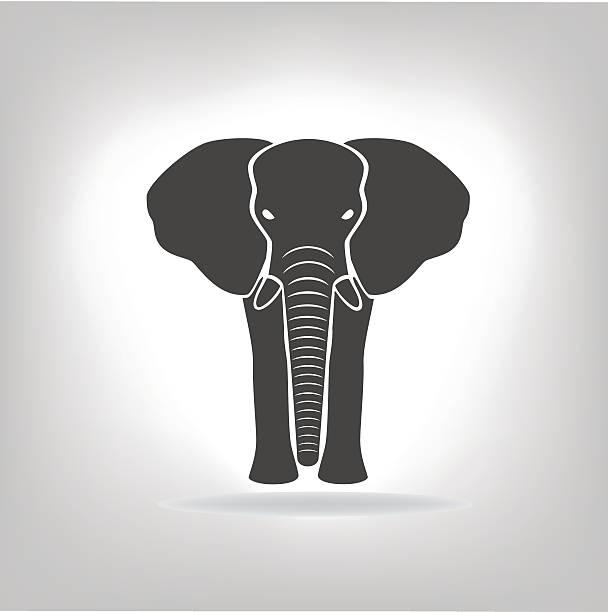 Best Elephant Trunk Illustrations, Royalty-Free Vector ...