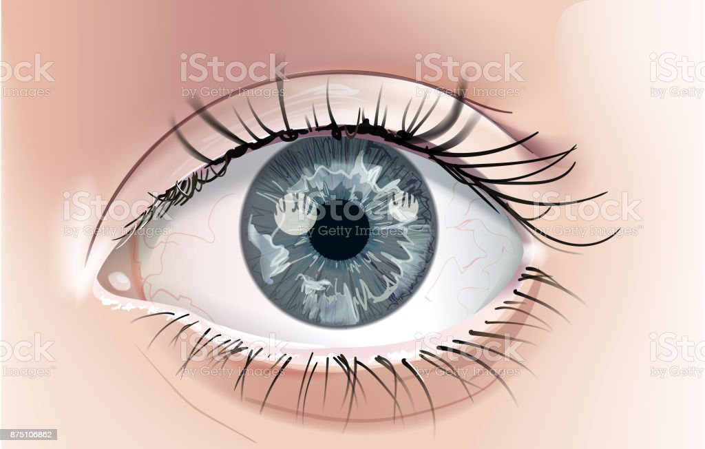 Gray Eye vector art illustration