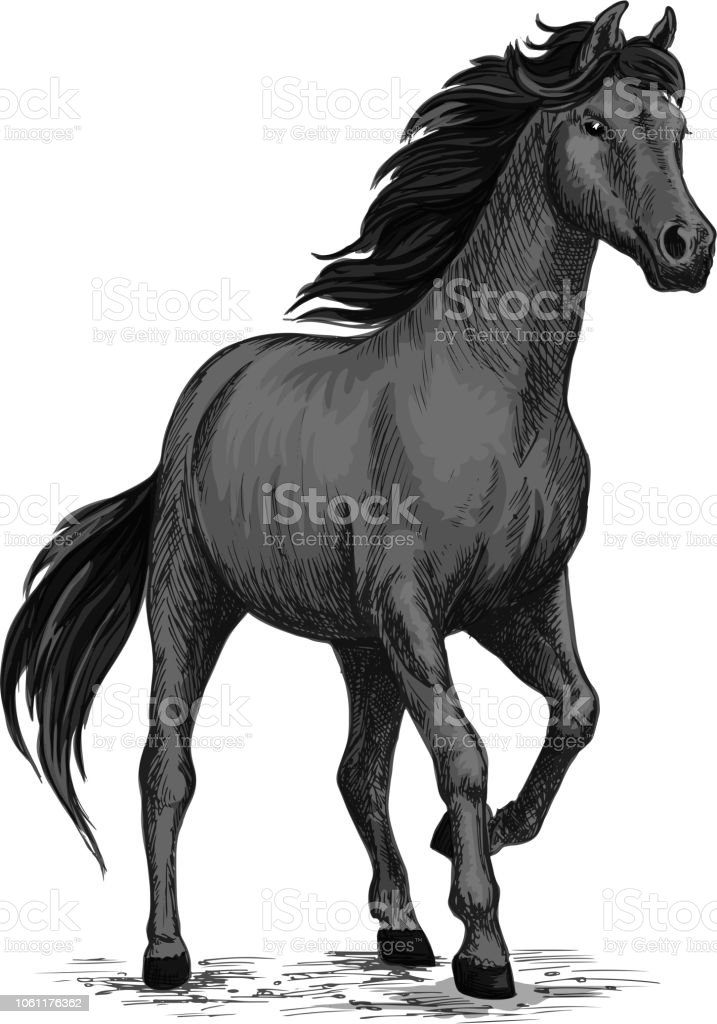 Gray Horse With Stomping Hoof Stock Illustration Download Image Now Istock