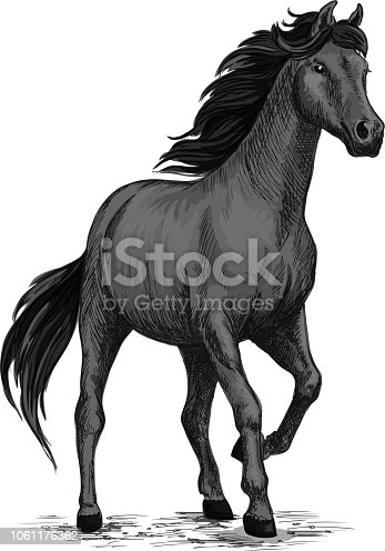 Wild black mustang stallion standing and stomping with hoof. For equestrian sport and hose riding, equine design. Black horse sketch