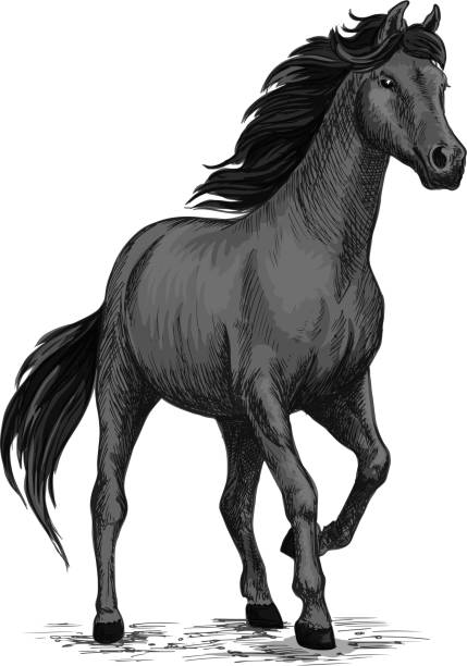 Gray horse with stomping hoof vector art illustration