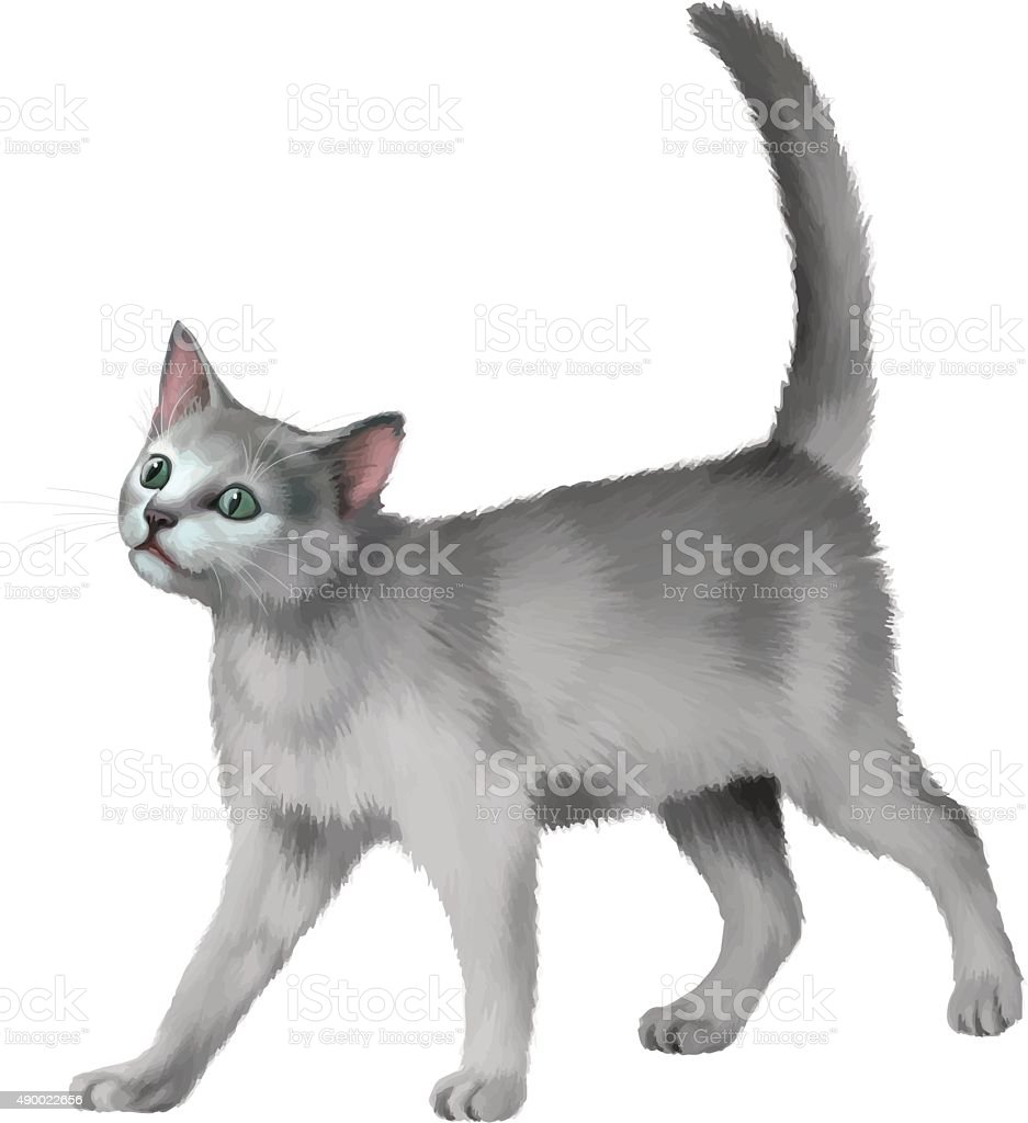 Gray Kitten walks against white background vector art illustration