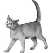 Gray Kitten walks against white background
