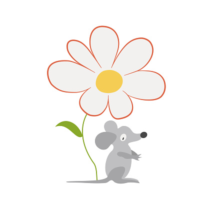 Gray mouse and chamomile. White daisy flower with a yellow center. Cartoon character, funny forest animal, field mouse. Summer nature. Hand-drawn vector. Design element for illustrations, baby fabric.