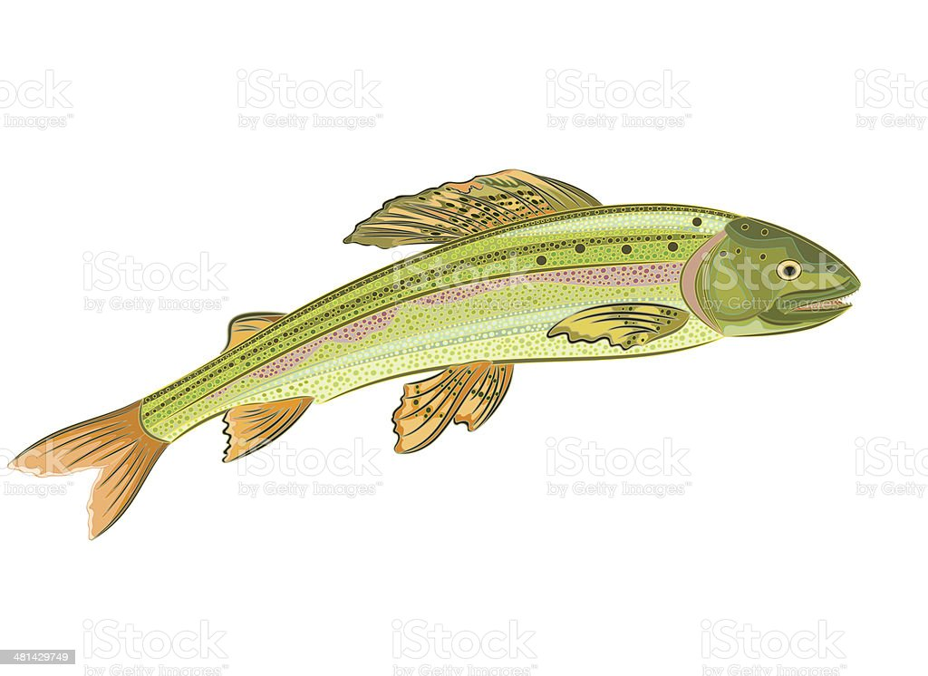 Grayling, salmon-predatory fish vector art illustration