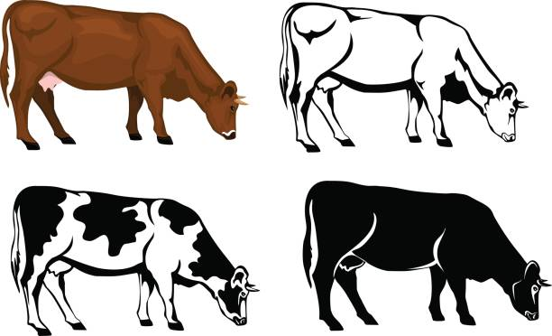 grazing cow in brown color, silhouette, contour and patched silhouette  set vector art illustration