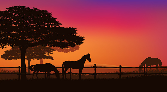 grazing horse herd behind fence at sunset vector silhouette scene