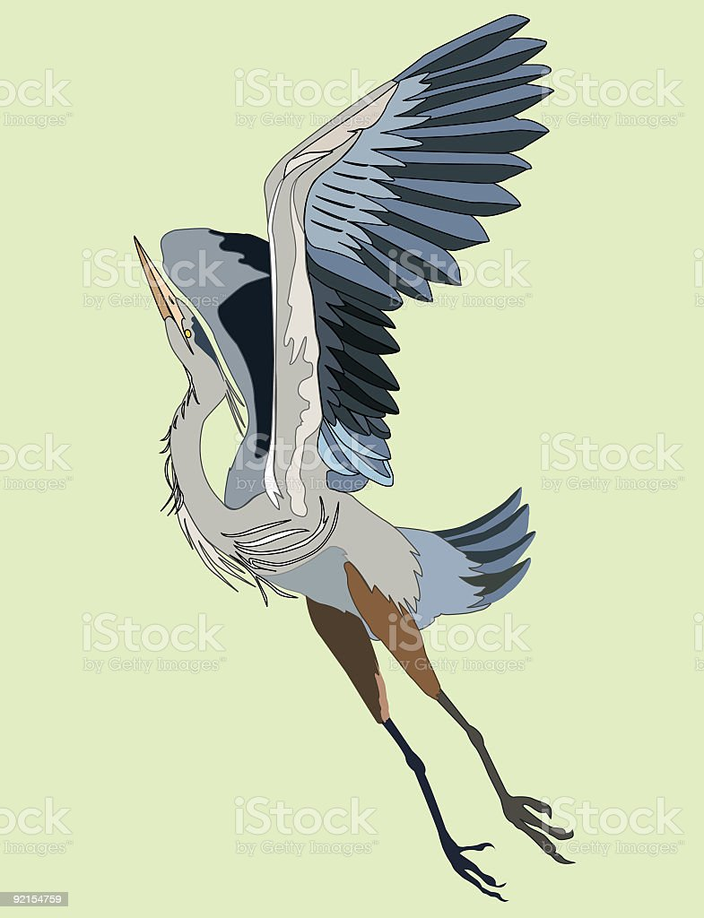 Great Blue Heron vector art illustration