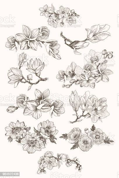 Great collection of highly detailed hand drawn flowers isolated on vector id954522436?b=1&k=6&m=954522436&s=612x612&h=4e efxhno5ssztcwiy9yfpo4twv mhxtti7dnnvvgco=