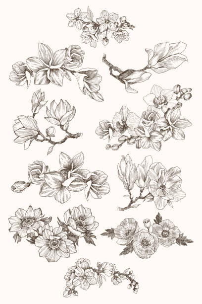 ilustrações, clipart, desenhos animados e ícones de grande coleção de flores altamente detalhadas mão desenhada isolado no fundo branco. magnólia, papoula, plumeria, anêmona, orquídea. para convite, logotipo, casamento, design. vector - papoula planta