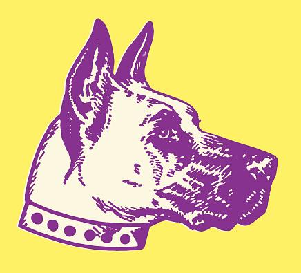 Great Dane Dog Head