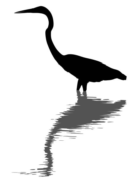 Great egret silhouette and reflection vector art illustration