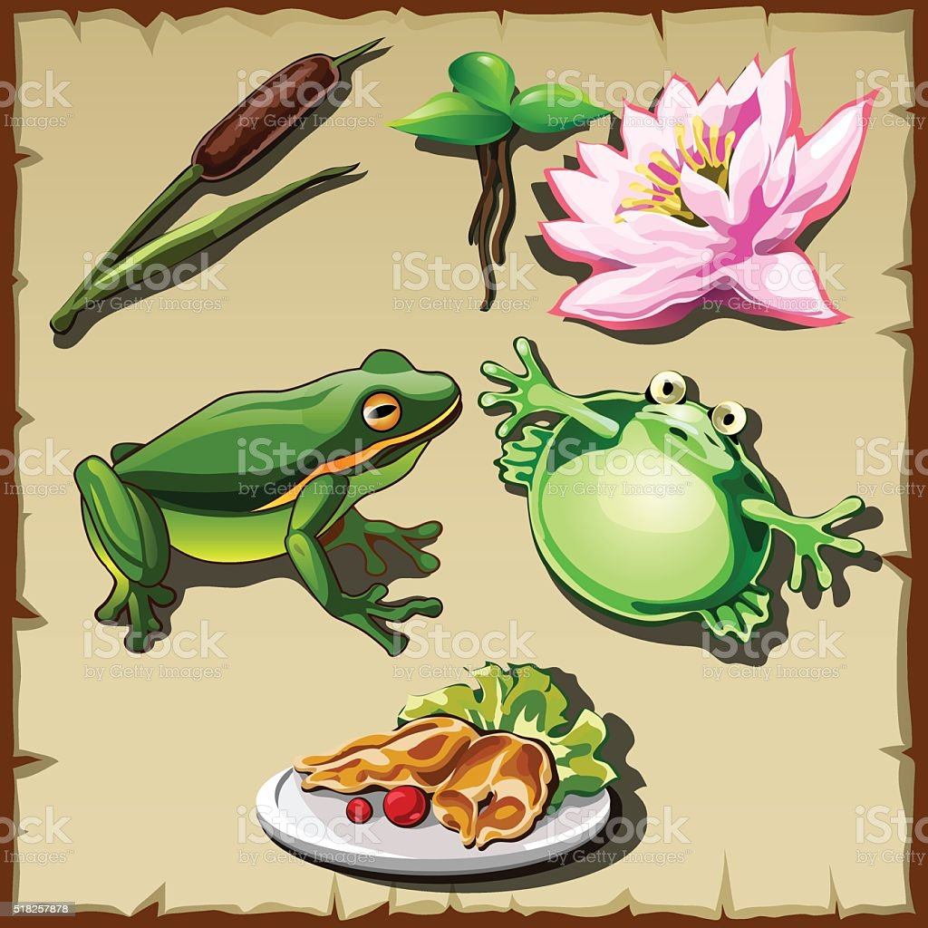 Great frog kingdom, set of objects related vector art illustration
