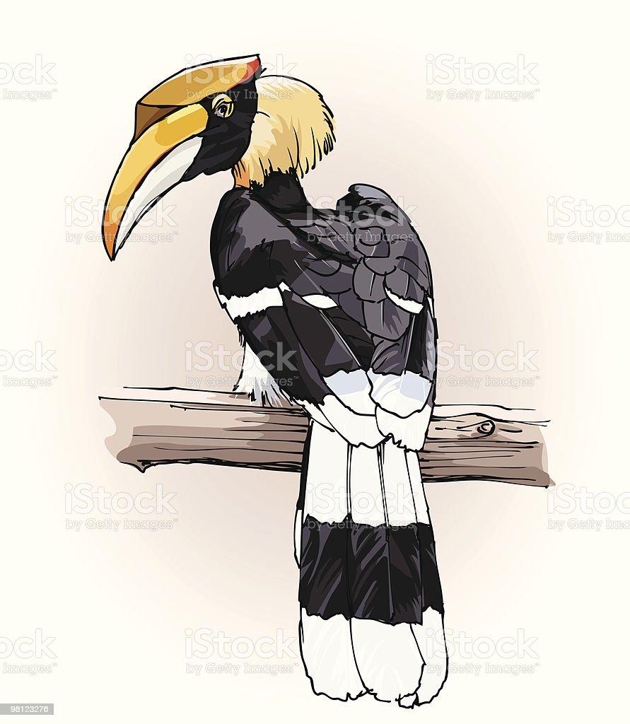 great hornbill vector art illustration