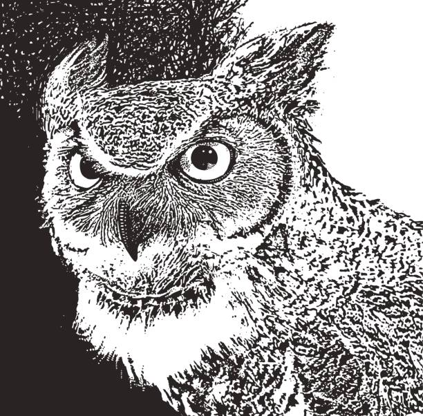 great horned owl close up - great horned owl stock illustrations, clip art, cartoons, & icons