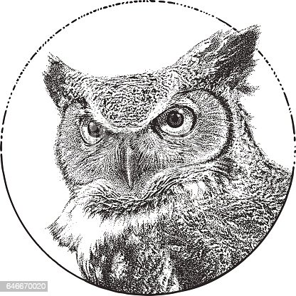 istock Great Horned Owl close up 646670020
