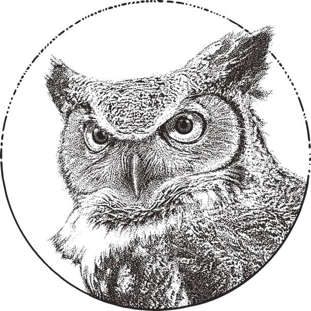 great horned owl close up - black and white owl stock illustrations, clip art, cartoons, & icons