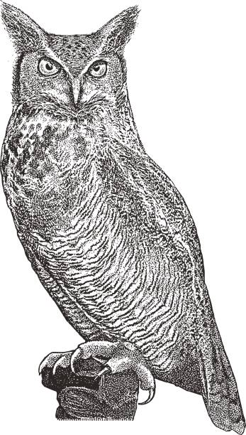 great horned owl perching - great horned owl stock illustrations, clip art, cartoons, & icons