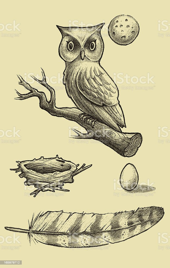 Great Horned Owl Sketch Stock Vector Art & More Images of Animal ...