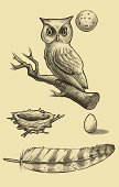 this is a hand drawn illustration of a great horned own with an owl nest, egg and tail feather. great way to show more about the animal in a kid friendly way.