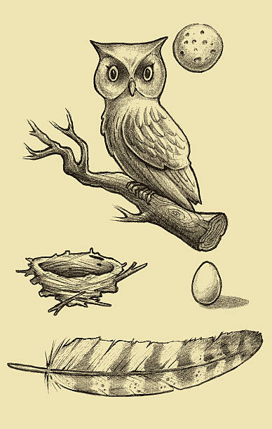 great horned owl sketch - great horned owl stock illustrations, clip art, cartoons, & icons