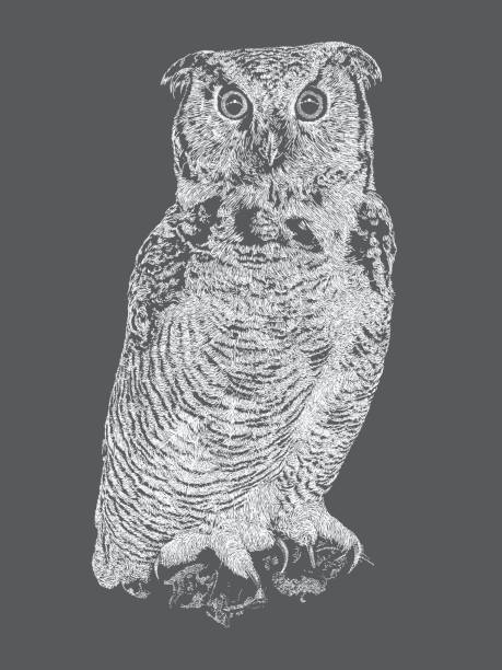 Top 60 Great Horned Owl Clip Art, Vector Graphics and ...