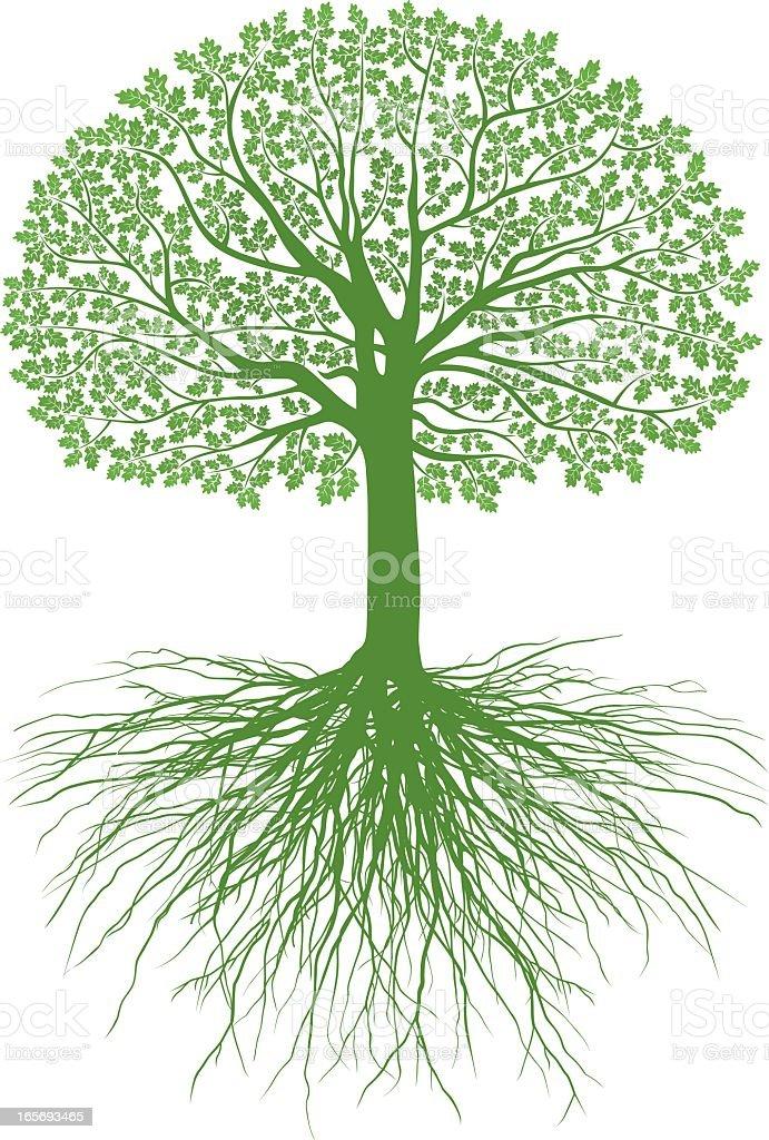 Great Oak Roots royalty-free stock vector art