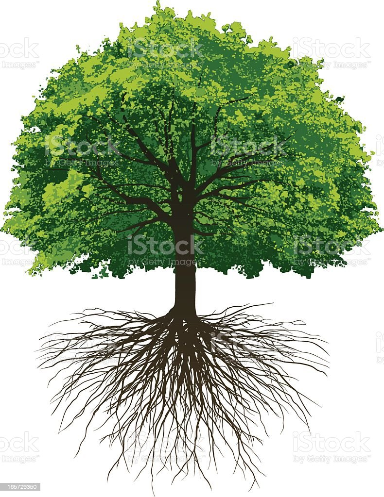 Great Oak Roots vector art illustration