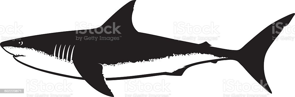 royalty free great white shark clip art vector images rh istockphoto com shark clipart for kids shark clipart free