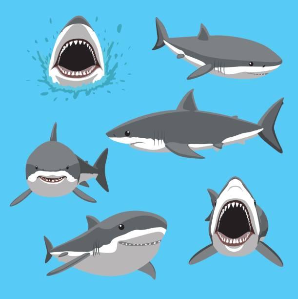 Great White Shark Six Poses Cartoon Vector Illustration Animal Cartoon EPS10 File Format great white shark stock illustrations