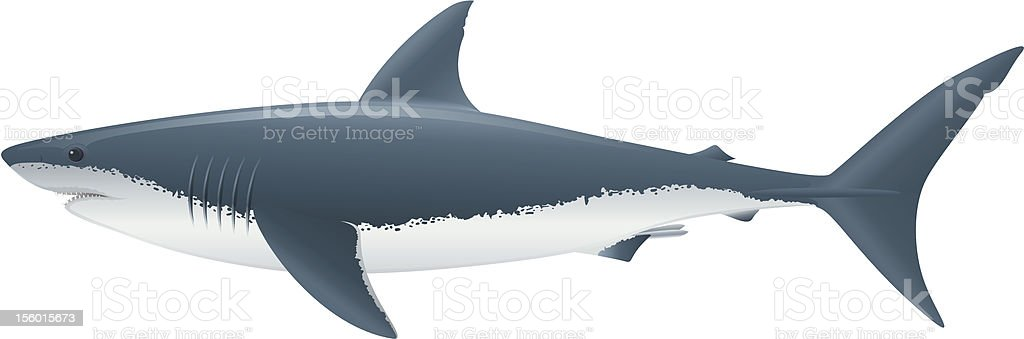Great White Shark royalty-free great white shark stock vector art & more images of animals hunting