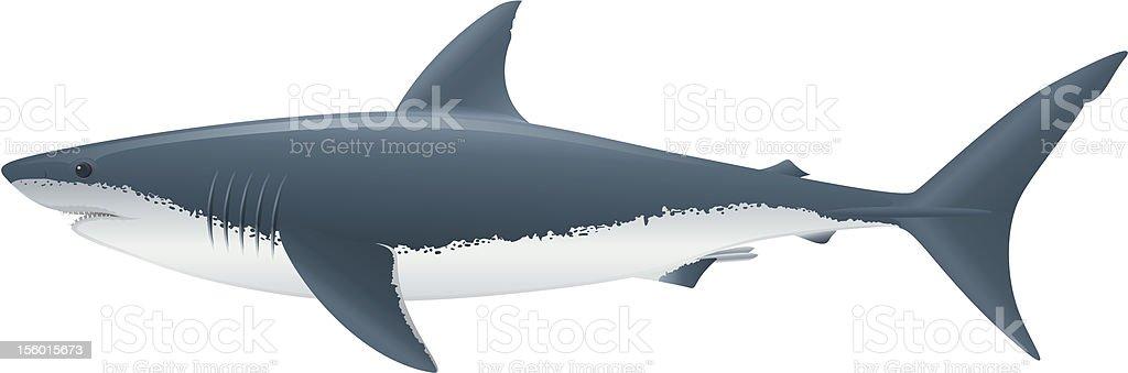 royalty free great white shark clip art vector images rh istockphoto com shark clipart cute share clip art on facebook