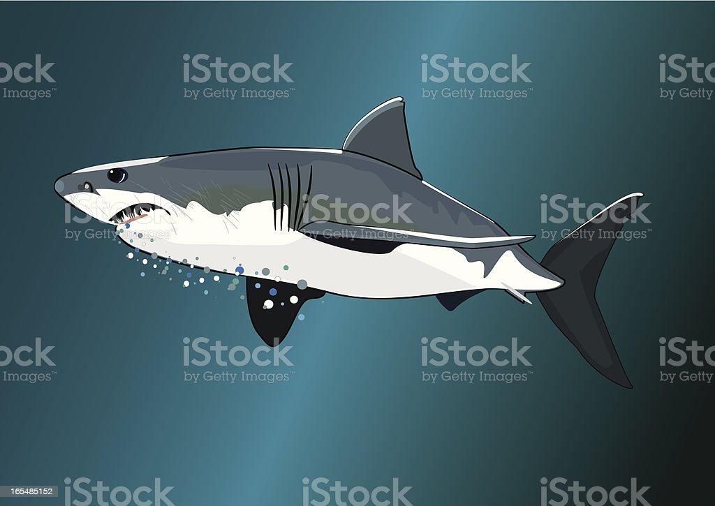 Great White Shark vector art illustration