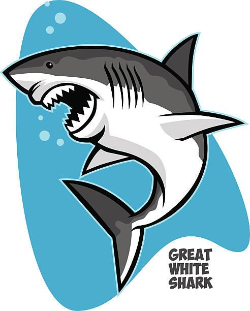 great white shark vector of great white shark great white shark stock illustrations