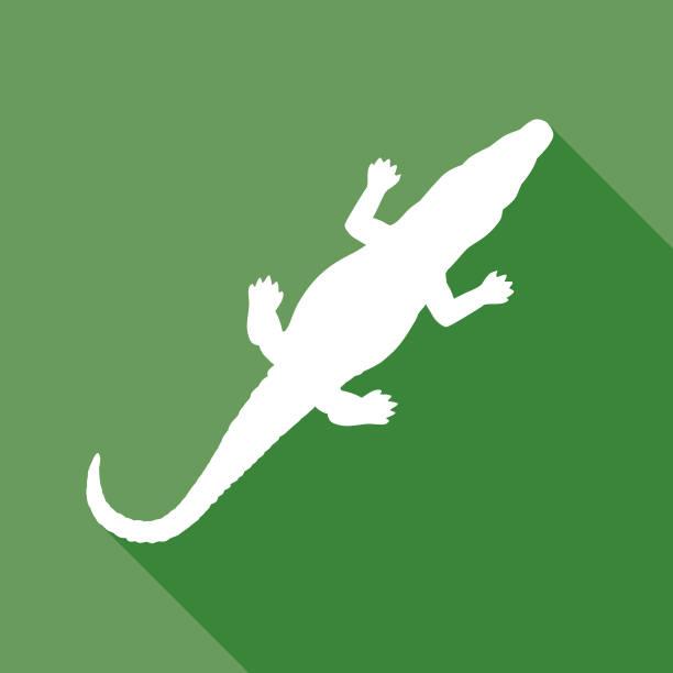 Green Alligator Icon Vector illustration of a green and white aligator icon. crocodile stock illustrations
