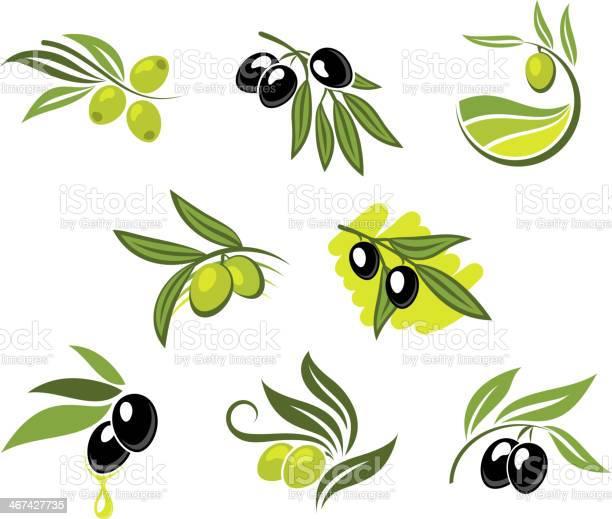 Green and black olives set vector id467427735?b=1&k=6&m=467427735&s=612x612&h=aq 3v73 apk8304fresojj5ssdwz0djntoxqyzo24bo=