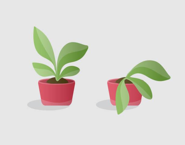 ilustrações de stock, clip art, desenhos animados e ícones de green and wilted plants - planta morta