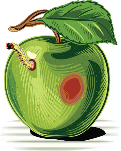green apple with worm - rotten apple stock illustrations, clip art, cartoons, & icons