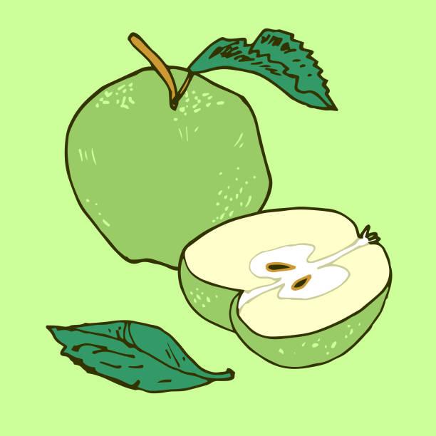 Green Apples vector art illustration
