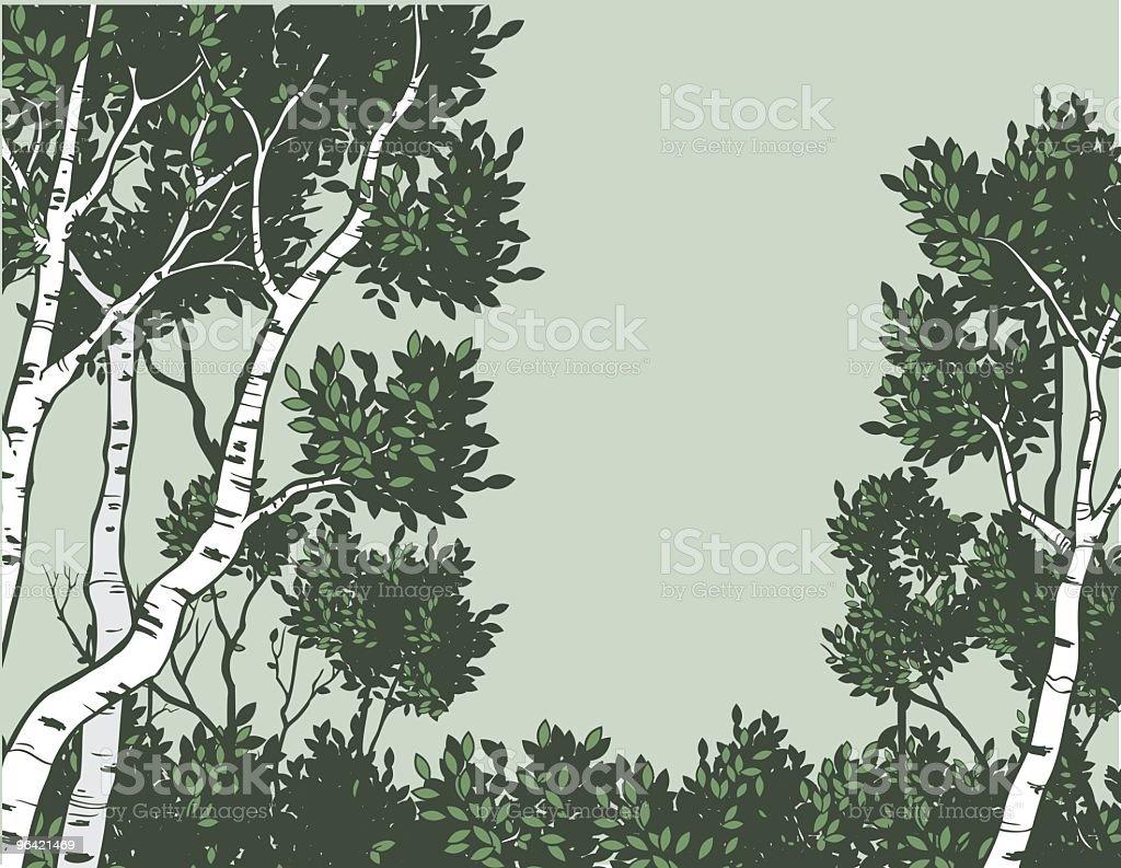 Green Aspen vector art illustration