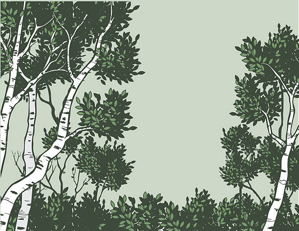 Best Aspen Tree Illustrations, Royalty-Free Vector ...