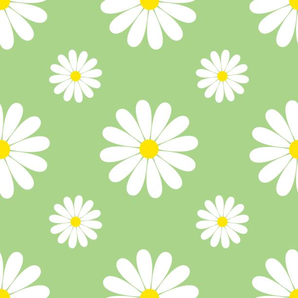 Green background seamless pattern with chamomiles Beautiful spring green background seamless pattern with white flowers chamomiles. Floral trendy stylish wallpaper. Vintage nature background. Vector illustration chamomile plant stock illustrations