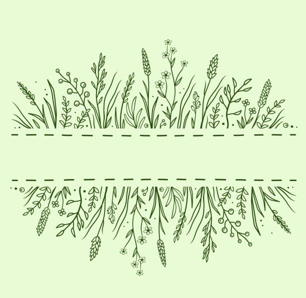 ilustrações, clipart, desenhos animados e ícones de fundo verde com ervas e flores - medicina alternativa