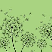 Beautiful nature green background with black dandelions and flying fluff. Floral stylish trendy wallpaper with summer or spring flowers. Modern backdrop. Vector illustration