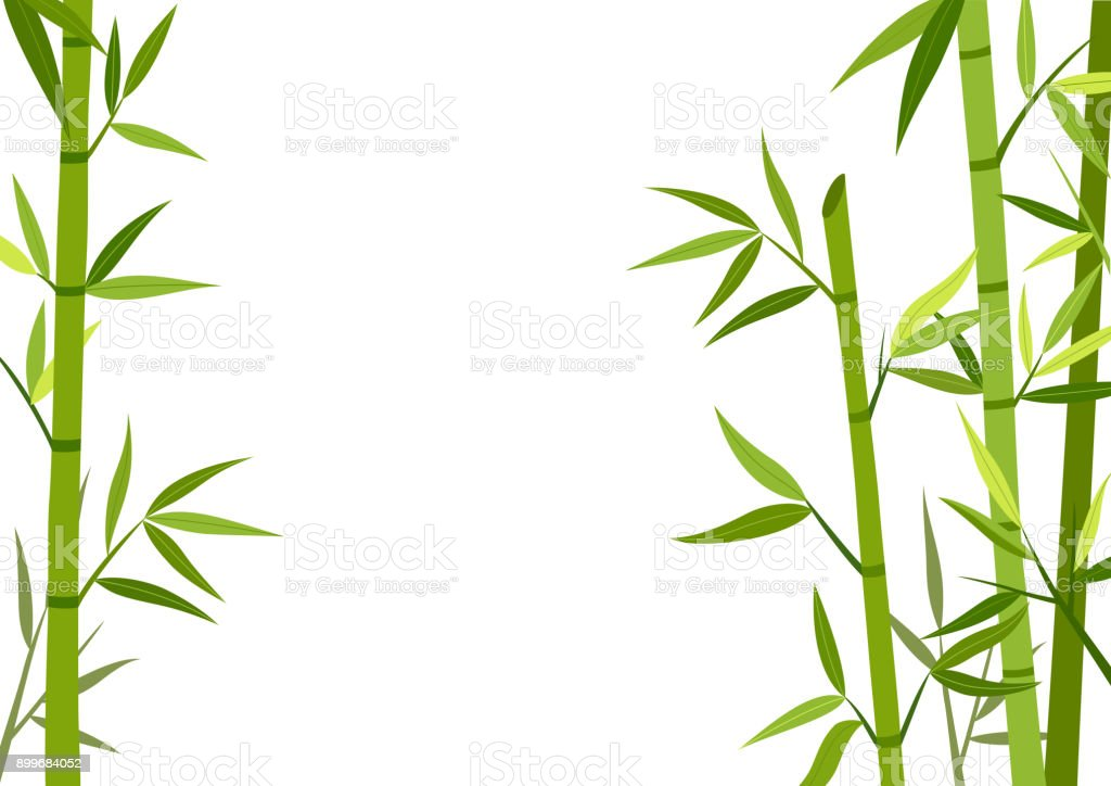 Green bamboo  background vector art illustration