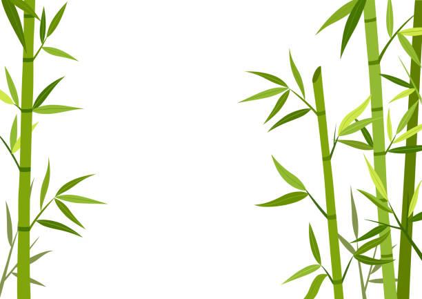 Green bamboo  background vector art illustration